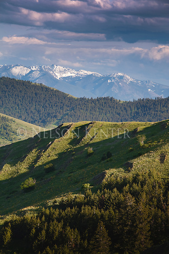 Grassy foothills, forested ridges and snow capped peaks of the Mission Mountains in western Montana