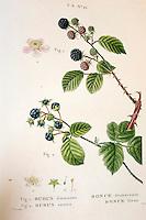 Bibliotheque - livre imprime et peint en couleur vers 1830