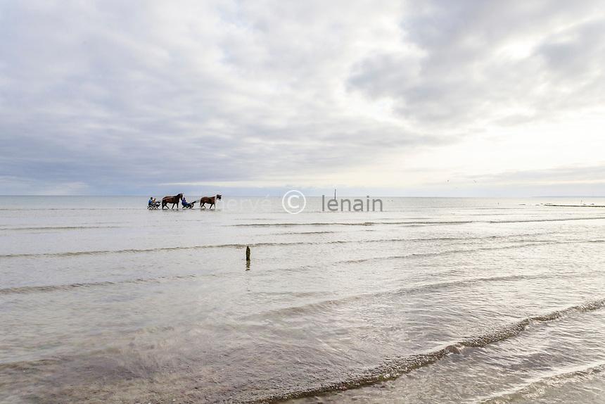 France, Manche, Cotentin, Sainte Marie du Mont, Utah Beach, horses harnessed with a sulky in the sea // France, Manche (50), Cotentin, Sainte-Marie-du-Mont,  Utah Beach, chevaux attelés d'un sulky dans la mer