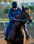 October 28, 2019 : Scenes from preparations for Breeders' Cup at Santa Anita Park in Arcadia, California on October 28, 2019. John Voorhees/Eclipse Sportswire/Breeders' Cup/CSM