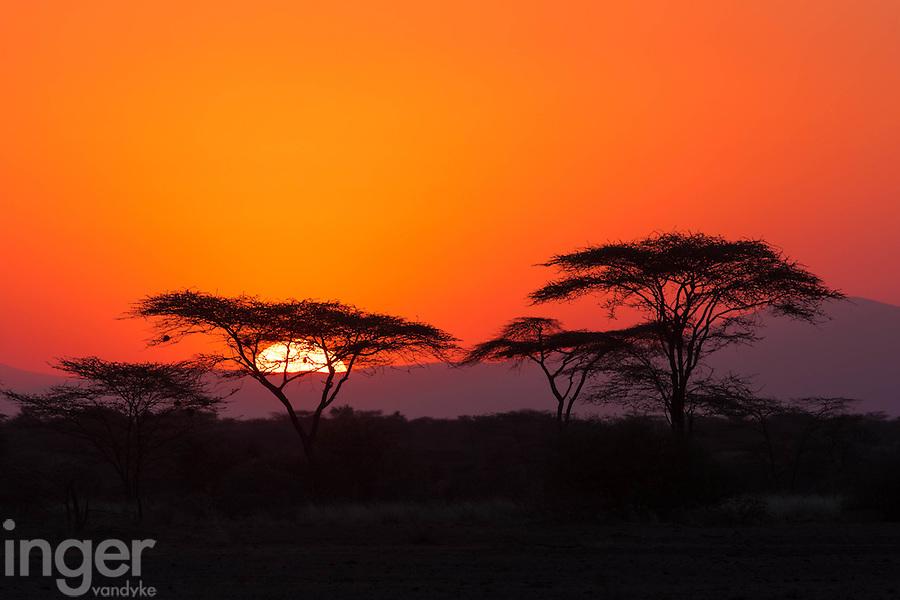 Sunset in the acacia trees at Awash, Ethiopia