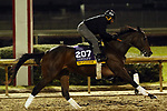 October 30, 2018 : Mopotism at Churchill Downs on October 30, 2018  in Louisville, Kentucky in preparation for the Breeders' Cup Distaff. Mary M. Meek/ESW/CSM
