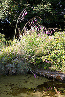 A pond in the garden, its paved surroundings mossy with age and overgrown with blossoming foliage