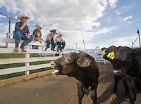 Young Cowboys sitting on livestock fencing with Cattle