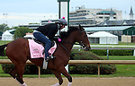 April 26, 2015 Kentucky Derby and Oaks workouts, Churchill Downs. Puca, owner Donegal Racing, trainer William Mott.  By Big Brown x Boat's Ghost (Silver Ghost)  ©Mary M. Meek/ESW/CSM