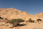 Wadi Hatira