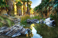 Reflection in West Fork Palm Canyon Creek. Palm Canyon. Indian Canyons. Palm Springs, California.