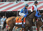Private Zone (no. 7) ridden by Martin Pedroza and trained by Jorge Navarro, wins the 52nd running of the grade 1 Forego Stakes for older males on August 29, 2015 at Saratoga Race Course in Saratoga Springs (Sophie Shore/Eclipse Sportswire)