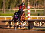 OCT 27: Breeders' Cup Juvenile Fillies Turf entrant Sweet Melania, trained by Todd A. Pletcher, gallops at Santa Anita Park in Arcadia, California on Oct 27, 2019. Evers/Eclipse Sportswire/Breeders' Cup