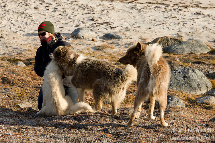Three huskies play with a woman in Baffin Island, Nunavut, Canada.