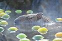 Water Hog Enjoys Open-Air Hot Sprint