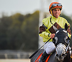 OLDSMAR, FLORIDA - MARCH 12: Destin #7, ridden by jockey Javier Castellano, after the race, where he broke the track record, and won the Lambholm South Tampa Bay Day Derby at Tampa Bay Downs on March 12, 2016 in Oldsmar, Florida (photo by Doug DeFelice/Eclipse Sportswire/Getty Images)