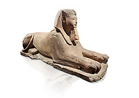 Ancient Egyptian Sphinx statue, sandstone, New Kingdom, early 19th Dynasty (1292-1250), Karnak, Temple of Amon. Egyptian Museum, Turin. white background.<br /> <br /> The Phatoah and queen could be represented by Sphinx statues and by associating human faces with the body of a lion the Egyptians combined the strength of the animal that was connected to the sun god with human inetelligence. In this guardian rols sphinxes were generally placed facing each other on either side of temple gates, processional ways or dooways inside the temple. . Drovetti Collection. C1408
