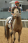 HOT SPRINGS, AR - FEBRUARY 20: #2 Silver Dust, with Corey Lanerie aboard, after the running of the Southwest Stakes at Oaklawn Park on February 20, 2017 in Hot Springs, Arkansas. (Photo by Justin Manning/Eclipse Sportswire/Getty Images)