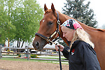 May 15, 2014: Preakness contender Ring Weekend, who is trained by Graham Motion, is led by groom Lisa Conway to the Stakes barn upon arrival Thursday morning at Pimlico Race Course, Baltimore, MD. ©Joan Fairman Kanes/ESW/CSM
