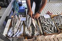 - Trapani, the fish market....- Trapani, il mercato del pesce