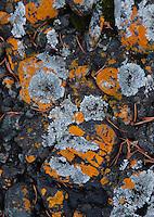 Rock Face and Lichens, Gossip Island, San Juan Islands, Washington, US