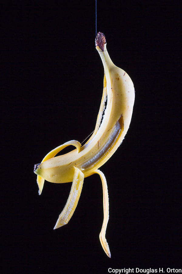 Portrait of a Banana on a string.