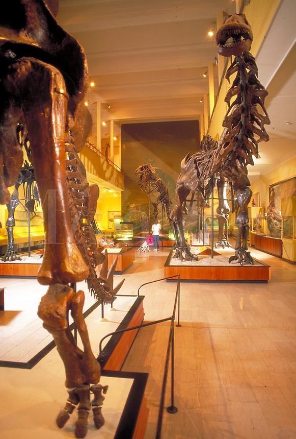 Dinosaur Hall exhibits ancient bones collected from Utah's Dinosaur National Park. Pittsburgh Pennsylvania United States.
