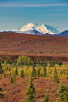 Mt. Denali North And South Summits Visible Across The Autumn Tundra, Denali National Park, Interior, Alaska.