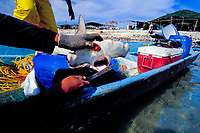 Shark finning camp, Sea of Cortez, Mexico