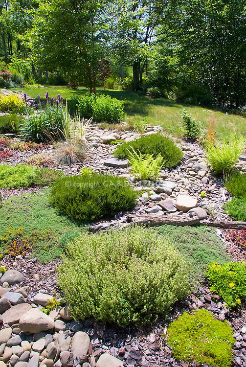 Hillisde plantings, Sunny Rocky sloped alpine rock garden with many tough drought-tolerant plants in sun in summer, herb Thymus thymes, Sagina, ferns, sedum, liatris, calluna heather shrubs, ornamental grasses, mixture of plants