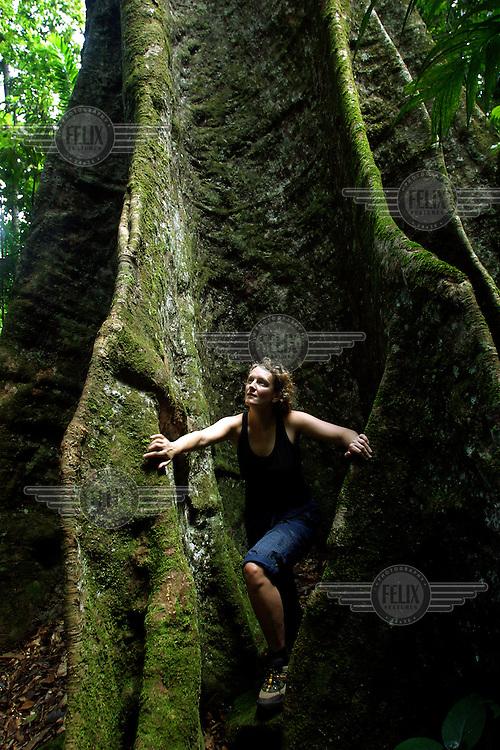A tourist explores the giant roots of a Girandera Caribense tree.