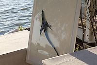 Oceana's Save the Last Sharks