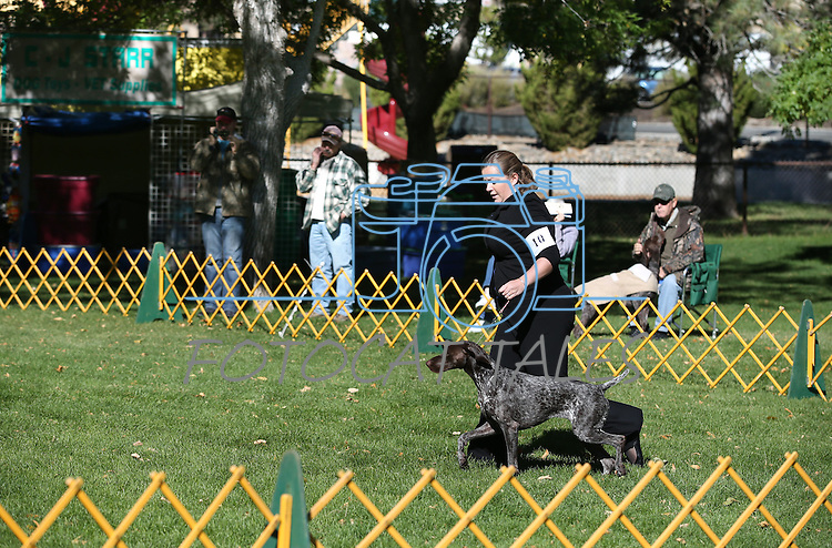 Carly Henderson, of Tuscon, and her dog Kate compete in the German Shorthaired Pointer specialty event at the Bonanza Kennel Club of Carson City's 24th Annual Dog Shows and Trials at Fuji Park in Carson City, Nev., on Friday, Sept. 27, 2013. <br /> Photo by Cathleen Allison/Nevada Photo Source