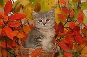 Carl, ANIMALS, photos(SWLA2128,#A#) Katzen, gatos