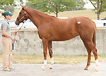 11 September 2010.  Hip #1  Giant's Causeway - Unfinished Dream filly, consigned by Three Chimneys sales.