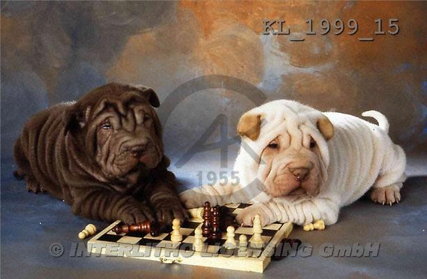 Interlitho, Alberto, ANIMALS, dogs, photos, 2 shar peis, chess(KL1999/15,#A#) Hunde, perros