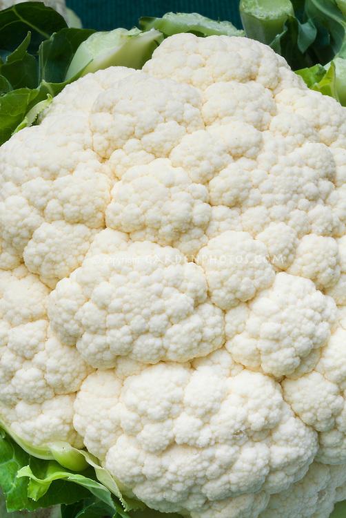 Cauliflower 'Cornell' vegetable, closeup of florets and head