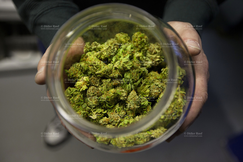 USA. Washington state. Seattle. Skunk buds in a glass jar at AuricAG. AuricAG is a licensed producer and processor of Marijuana in Washington State. AuricAG is authorized, according to cannabis legalization in Washington State, to supply only licensed Washington State retail store fronts. AuricAG offers a wide array of strains that encompass the recreational aspect of the market as well as the medical market. After drying, the marijuana stems are trimmed off and the pot is stored in glass jar to dry it further. Skunk is a hybrid of Cannabis sativa and Cannabis indica, thus the combination of these two strains is considered to produce unique and conflicting effects that separate skunk weed from other types of marijuana. Additionally, this particular strain of cannabis is considered to be a more potent form of the drug as it contains 2-3 times more THC than standard marijuana. Cannabis, commonly known as marijuana, is a preparation of the Cannabis plant intended for use as a psychoactive drug and as medicine. Pharmacologically, the principal psychoactive constituent of cannabis is tetrahydrocannabinol (THC); it is one of 483 known compounds in the plant, including at least 84 other cannabinoids, such as cannabidiol (CBD), cannabinol (CBN), tetrahydrocannabivarin (THCV), and cannabigerol (CBG). 13.12.2014 © 2014 Didier Ruef