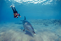 Snorkeler with Bottlenose Dolphin, Tursiops truncatus, Nuweiba, Egypt, Red Sea., Northern Africa