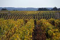 Europe/France/Centre/37/Indre-et-Loire/Vouvray: Le vignoble à l'automne