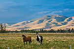 Two horses in a pasture in the Bitterroot Valley in Montana with rolling hills of the Sapphire Mountains across the valley