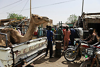 NIGER Zinder, market, camel on Peugeot pick-up / NIGER Zinder, Markt, Kamel auf Pick-up