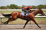#105Fasig-Tipton Florida Sale,Under Tack Show. Palm Meadows Florida 03-23-2012