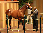 12 September 2010.  Hip #32 Tiznow - Delicate Dynamite colt sold for $425,000 at the Keeneland September Yearling Sale.  Consigned by Warrendale Sales.