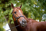 October 31, 2018 : Mind Your Biscuits at Churchill Downs on October 31, 2018 in Louisville, Kentucky. Evers/ESW/Breeders Cup