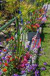 Patriotic flowers in Weston, Vermont, USA