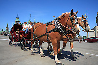 Ottawa (ON) CANADA - Mai 21, 2012 - Horse drawn caleche in front of the  House of commons...