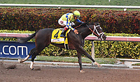 HALLANDALE, FL - APRIL 01: Always Dreaming (#4 ) gets a pat on the back before he crosses the finish line. Always Dreaming ridden by John Velazquez and trained by Todd A. plecher wins the 66th running of the Xpressbet Florida Derby (Grade 1) which has a 1 million dollar purse at Gulfstream Park on April 1, 2017 in Hallandale, Florida <br /> <br /> People:  Always Dreaming