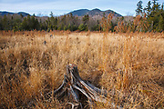 Wetlands area during the autumn months along the Sawyer River Trail in Livermore, New Hampshire USA. The Sawyer River Trail follows parts of the old Sawyer River Railroad logging line. Mount Carrigain can be seen in the background.