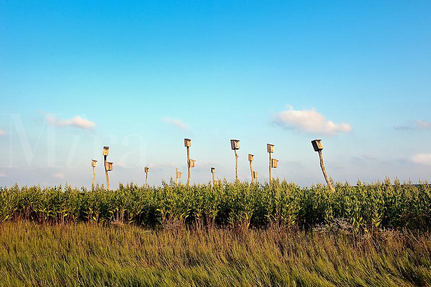 Birdhouses in salt marsh, Sandwich, Cape Cod, MA, Massachusettes