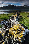 Lichens growing on stones on shoreline of Loch Na Keal. Isle of Mull, Inner Hebrides, Scotland, UK. June 2010.