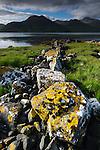 Lichens growing on stones on shoreline of Loch Na Keal. Isle of Mull, Inner Hebrides, Scotland, UK. June 2010.