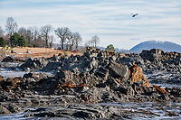 Coal fly ash sludge disaster on Watts Bar Lake, Swan Pond, Kingston, Tennessee