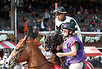 Limosine Liberal in the post parade as Whitmore (no. 3) wins the Forego Stakes (Grade 1), Aug. 25, 2018 at the Saratoga Race Course, Saratoga Springs, NY.  Ridden by  Ricardo Santana, Jr., and trained by Ron Moquett, Whitmore finished 1 1/2 lengths in front of City of Light (No. 8).  (Bruce Dudek/Eclipse Sportswire)